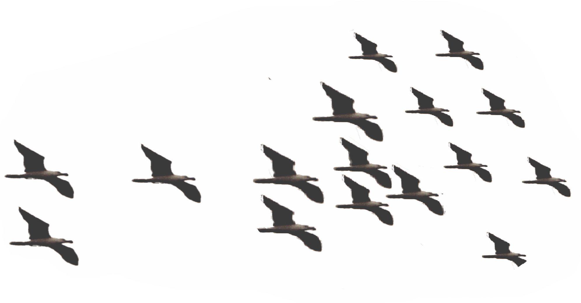 cropped-soul-flight.jpg